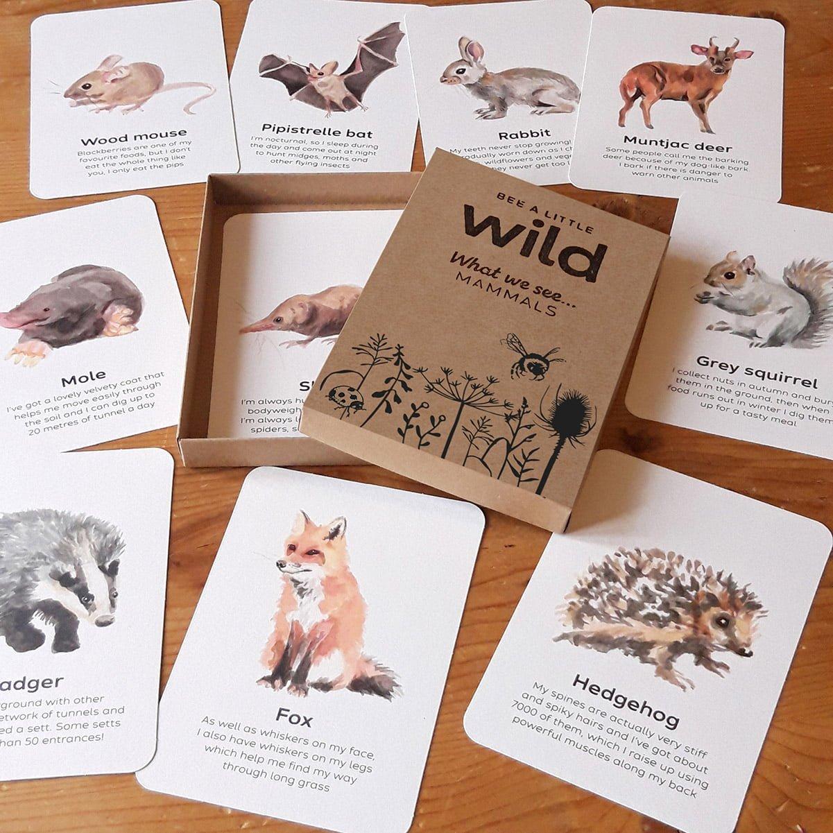 UK Mammals Nature Cards