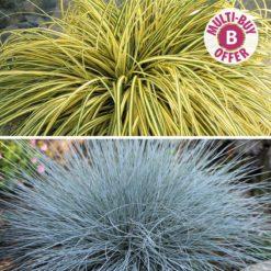 Award Winning Evergreen Grass Collection