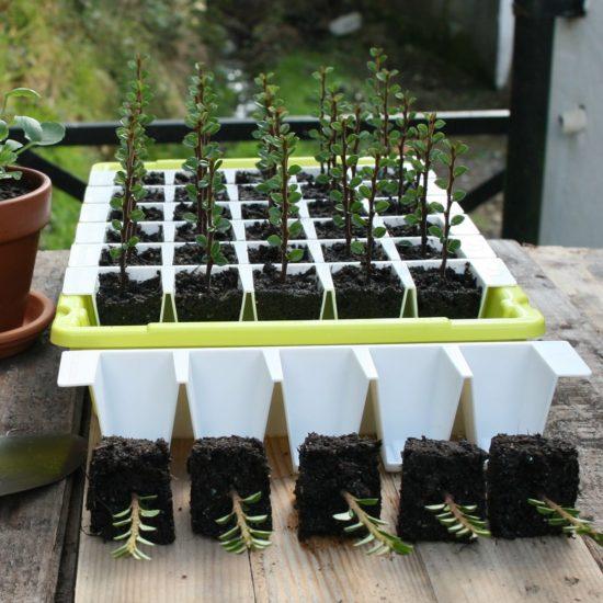 Bustaseed propagation kit lifestyle