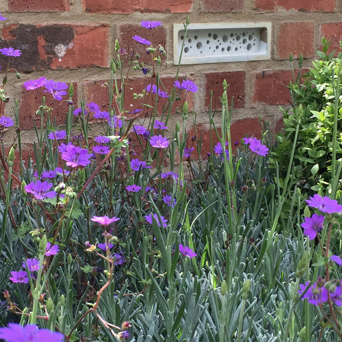 bee brick set into wall
