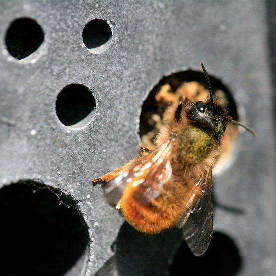 bee brick charcoal with bee