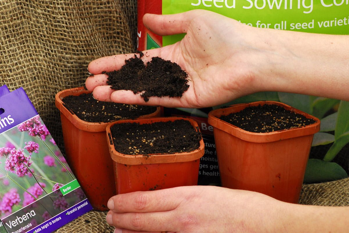 sowing seeds in pots