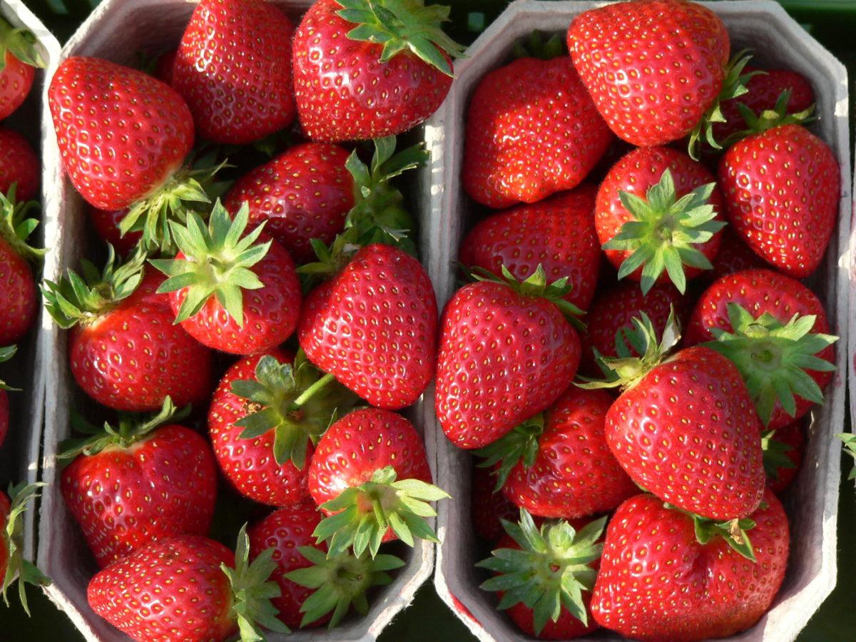 punnets of strawberry malwina fruits