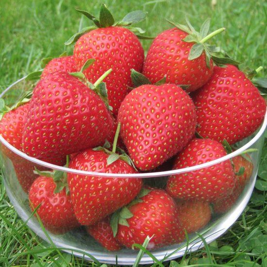 bowl of Strawberry vibrant fruits