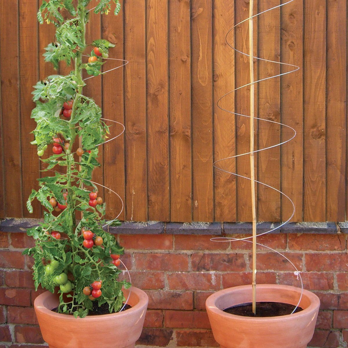 Plant twisters in pot and with tomatoes
