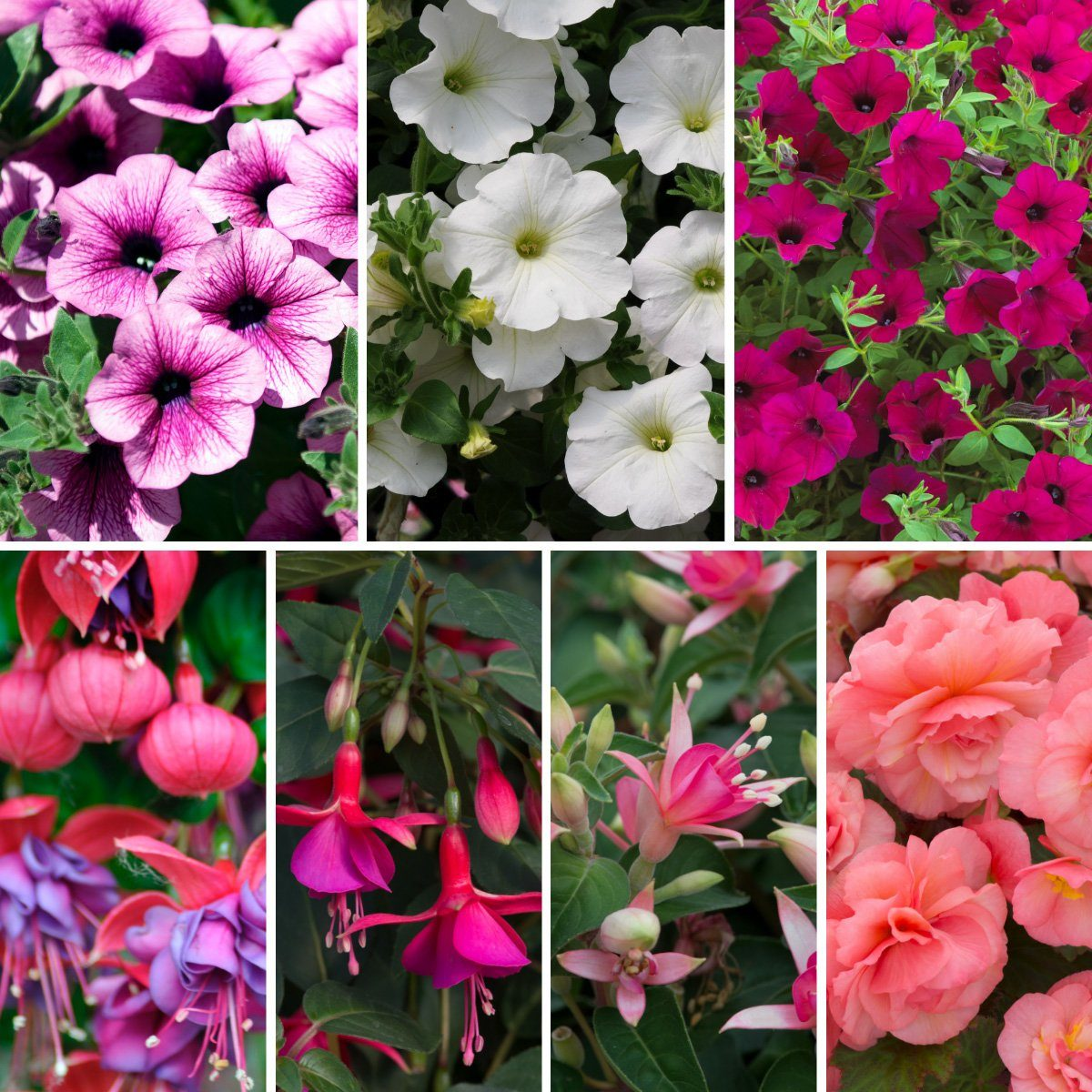 Ultimate Perfomers Collection_hanging baskets