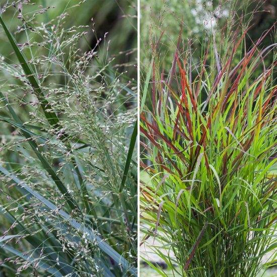 AGM Switch Grass Collection