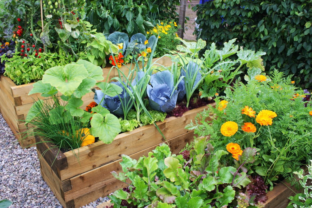growing veg for one in raised beds
