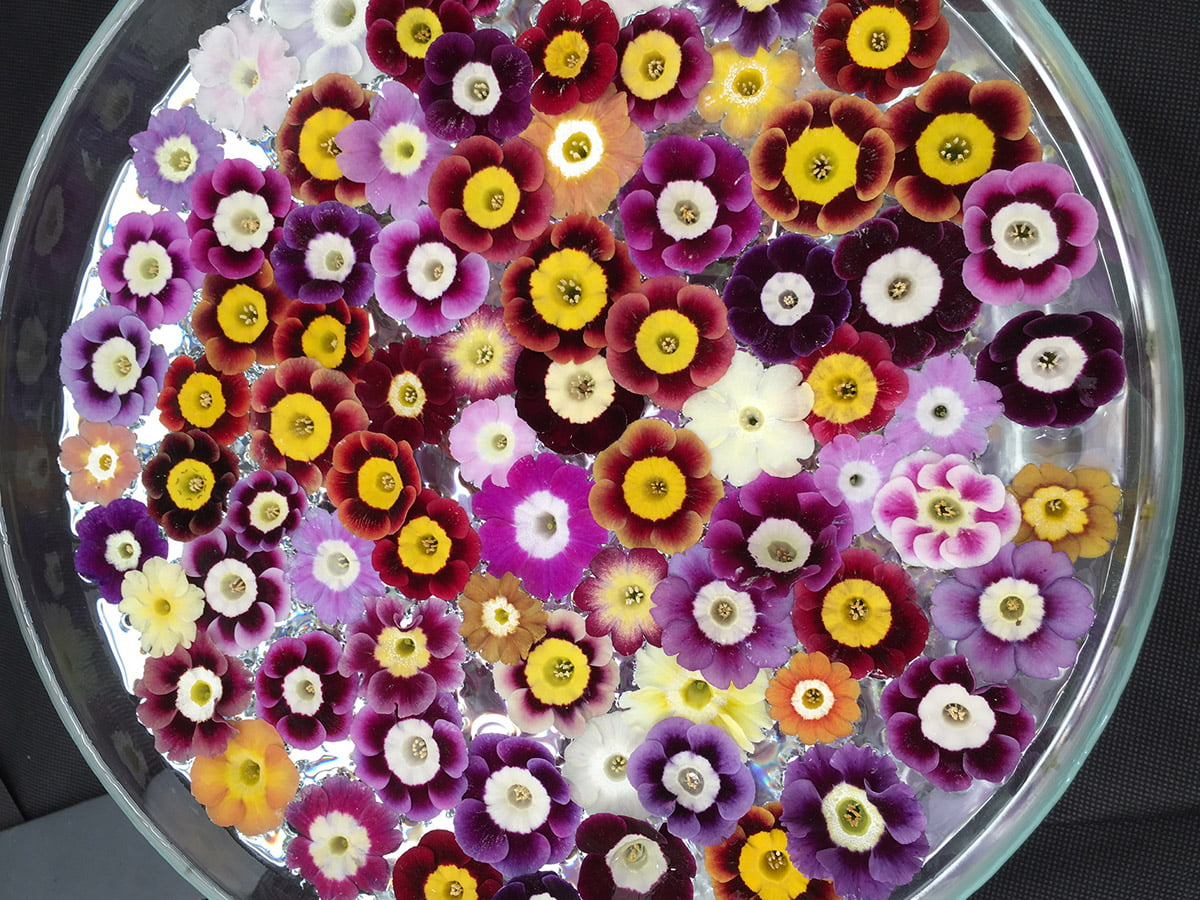 Bowl of floating flowers at Chelsea