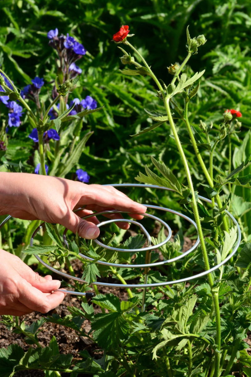 Spiral plant supports