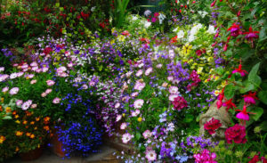 a beautiful mix of colourful flowers at Driftwood