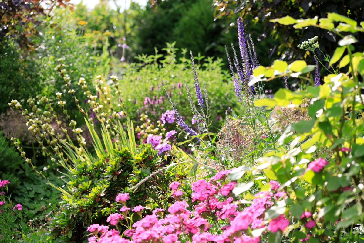 sunny packed flower border