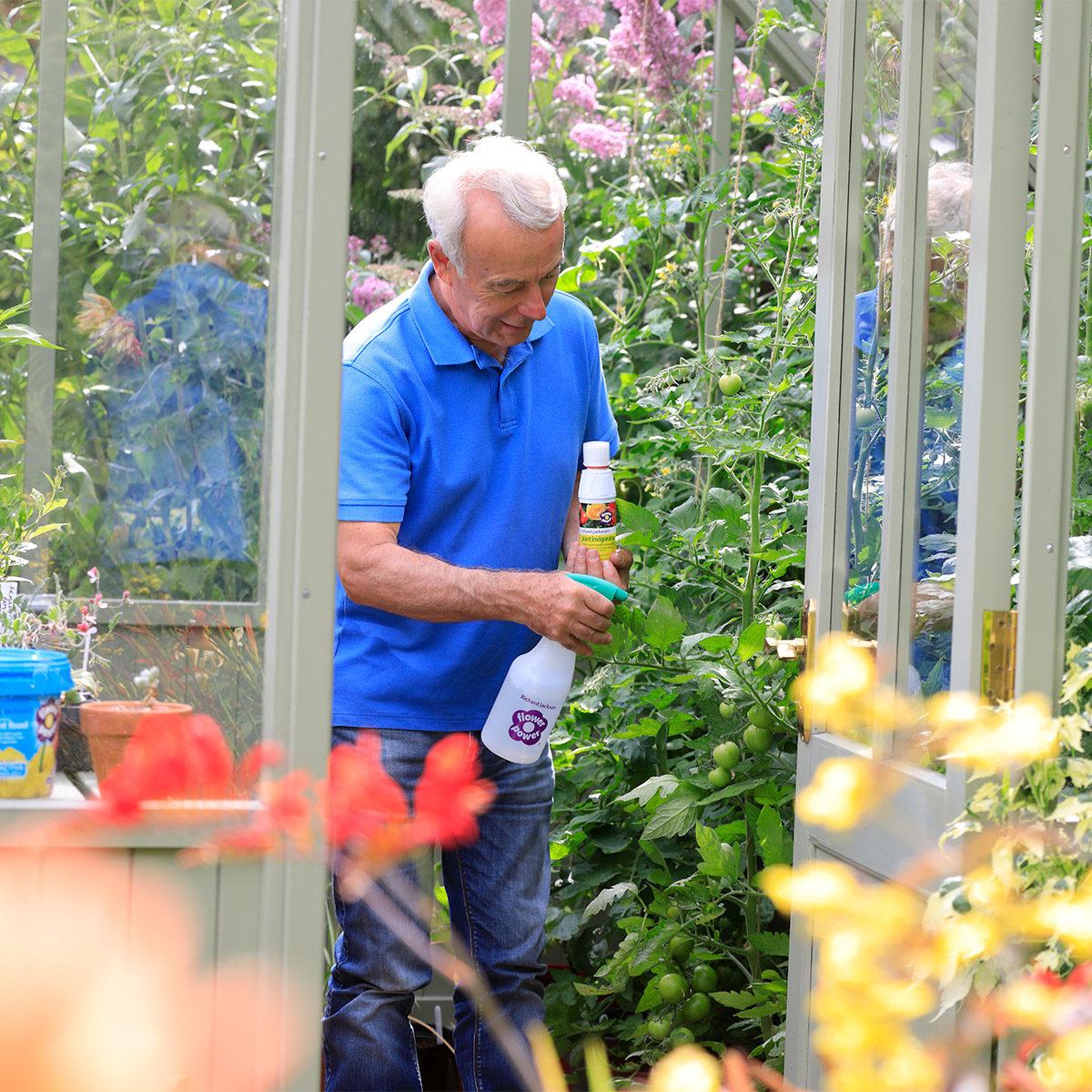 Richard spraying tomato plants with plant invigorator