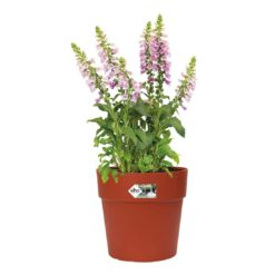 Vibia Straight Round Pot Brique with foxgloves