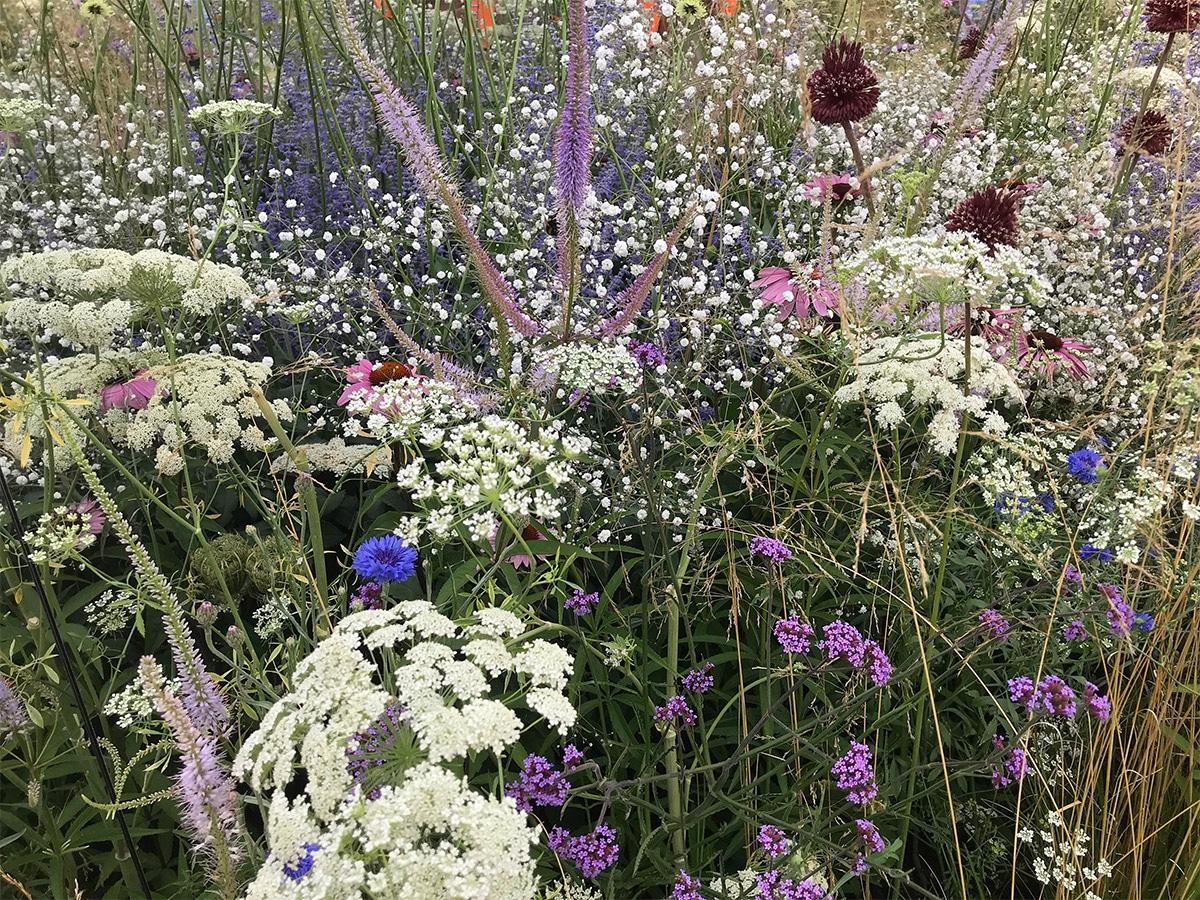 Soft planting at the Dibond Garden / Apeiron 2018 Hampton Court