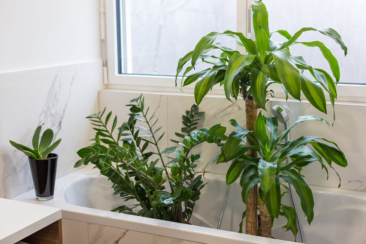 houseplants in bath tub