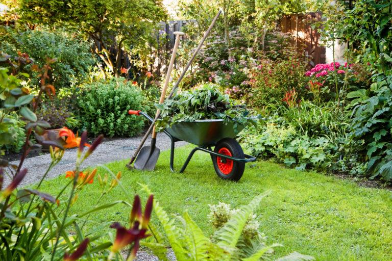 Garden in summer with wheelbarrow of weeds and pruned plants