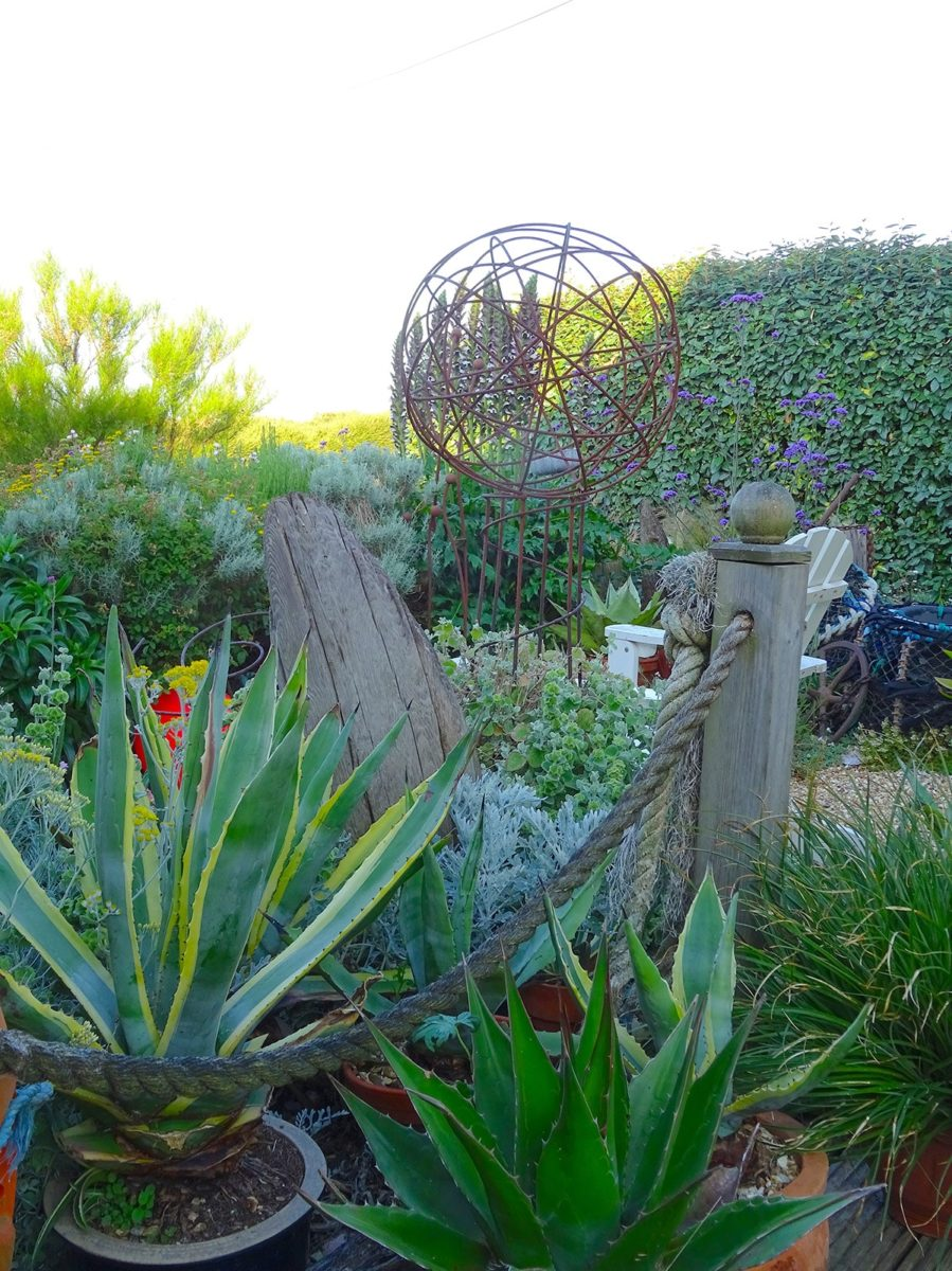 Agave in pots at Driftwood