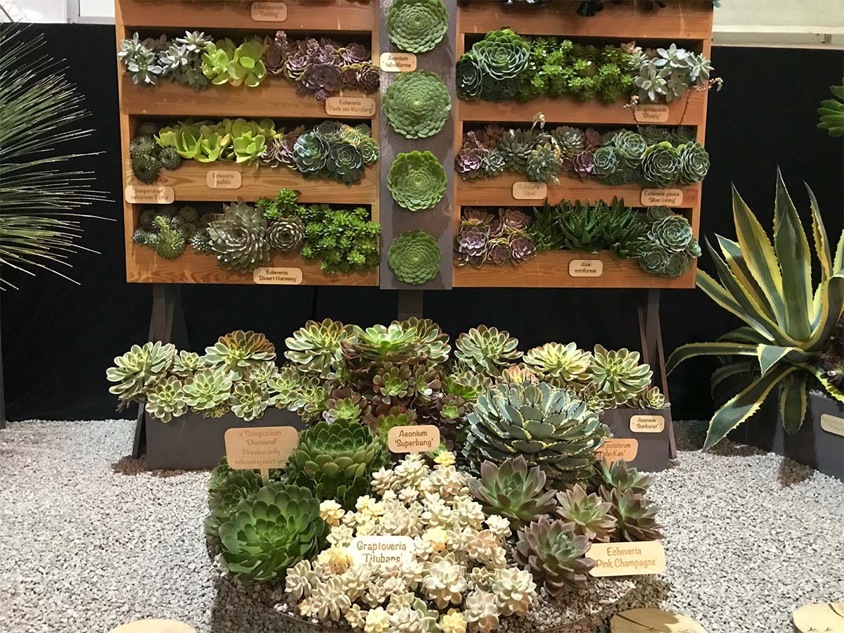 Surreal Succulents at RHS Chelsea Flower Show 2021
