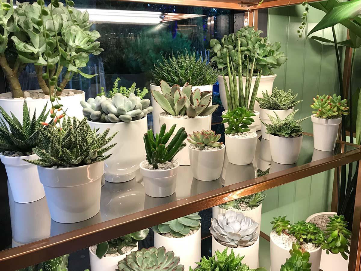 Pharmacy of Houseplants - Chelsea Flower Show 2021