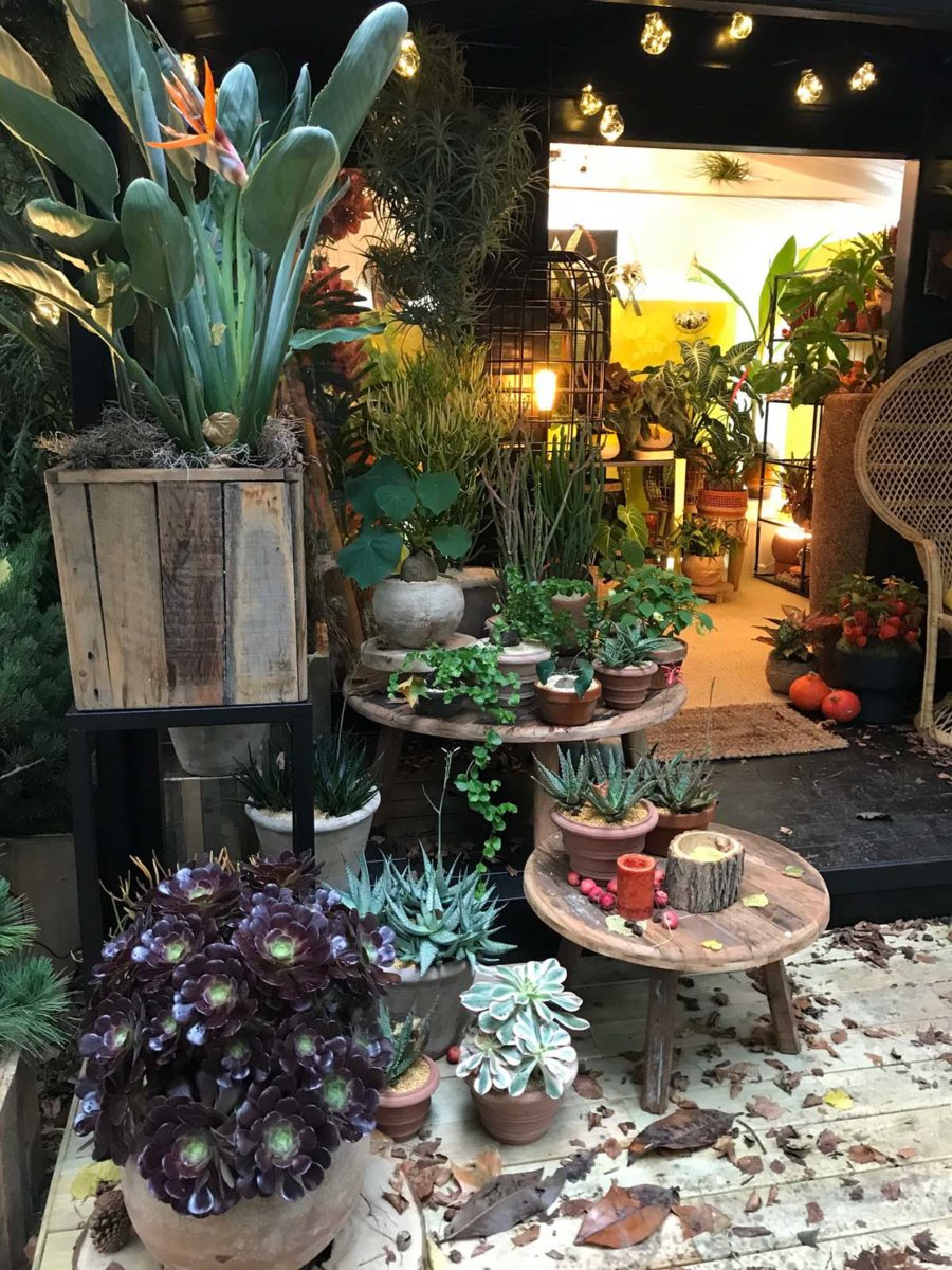 Celebrate Autumn with Houseplants - Chelsea Flower Show 2021