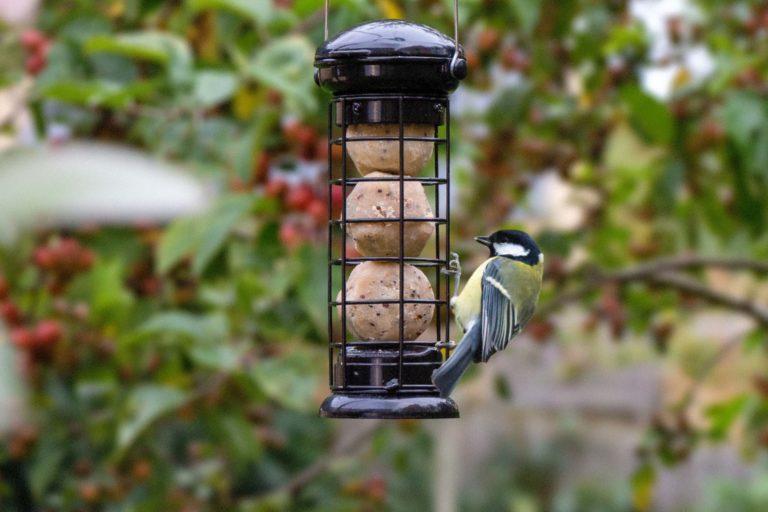 RJ suet balls in hanging feeder